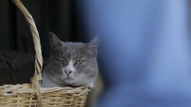 Kedi Von Katzen Und Menschen Download