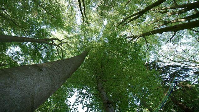 Das Geheime Leben Der Bäume Kino