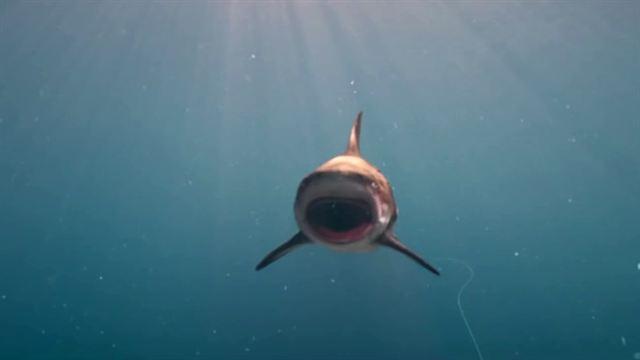 Deep Blue Sea 3 Trailer OV