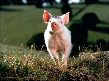 Ein Schweinchen namens Babe : Bild Chris Noonan