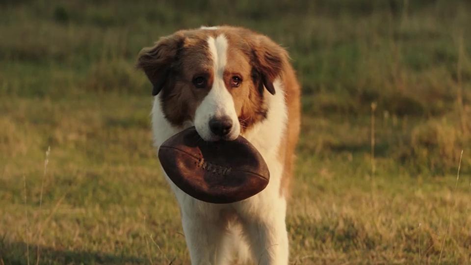 Bailey Ein Hund Kehrt Zurück