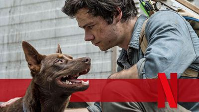 "Stirbt der Hund in ""Love And Monsters""? Alle Infos zum tierischen Netflix-Star"