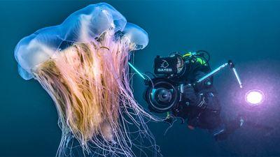 """Atemberaubende Bilder: Der Trailer zu """"Heimat Natur"""" ist eine wunderschöne Liebeserklärung an die Tier- und Pflanzenwelt"""