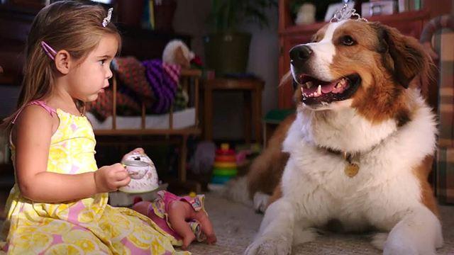 """Deutscher Trailer zu """"Bailey - Ein Hund kehrt zurück"""", der Fortsetzung des vieldiskutierten Hundefilm-Hits"""