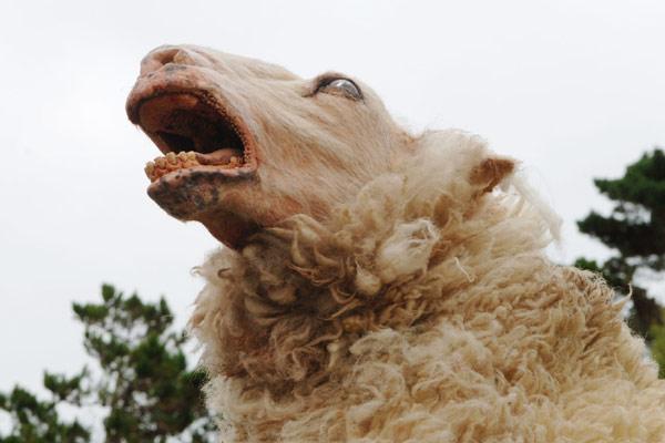 Black Sheep: Jonathan King