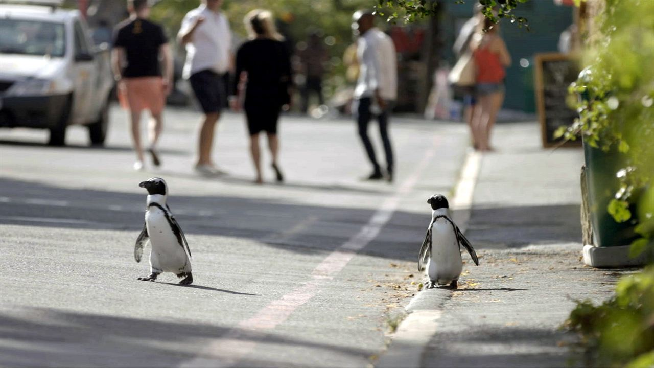 Stadt der Pinguine : Bild